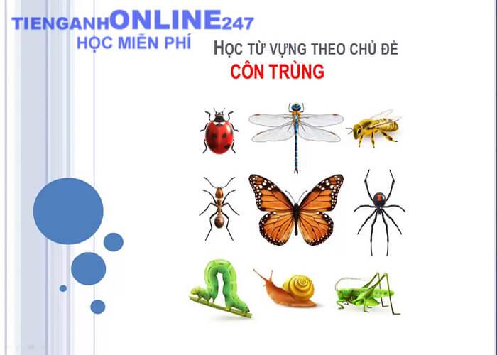 Từ vựng tiếng Anh theo chủ đề côn trùng